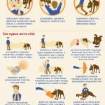 Как правильно отразить нападение собаки